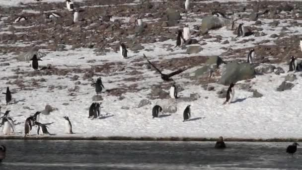 Birds and penguins on shore