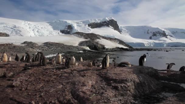 Pingvinek séta a parton