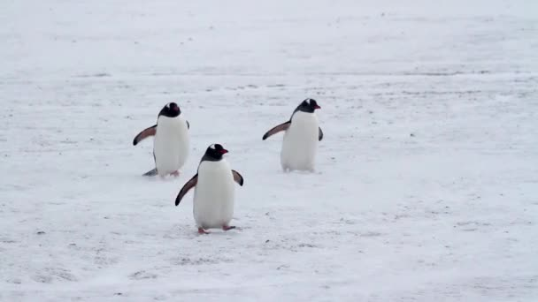 Penguins walking on shore