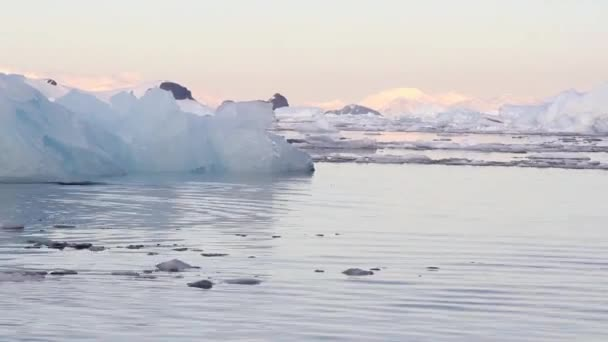Large Iceberg and swimming fur seal