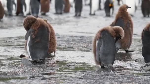 Penguins standing on shore