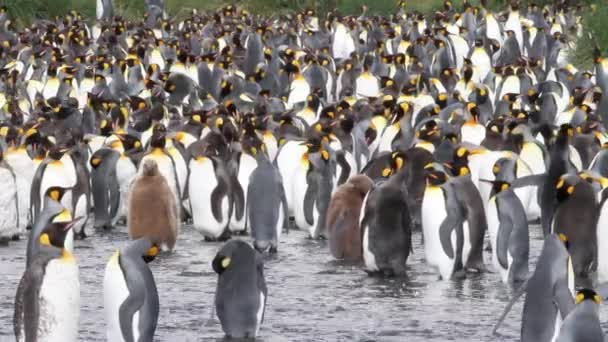 Skupina z kolonie tučňáků