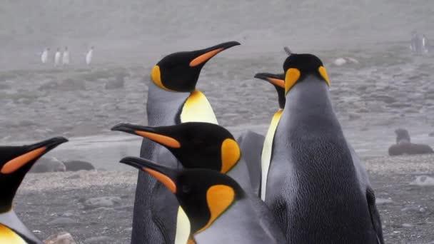 Tučňáků v Antarktidě