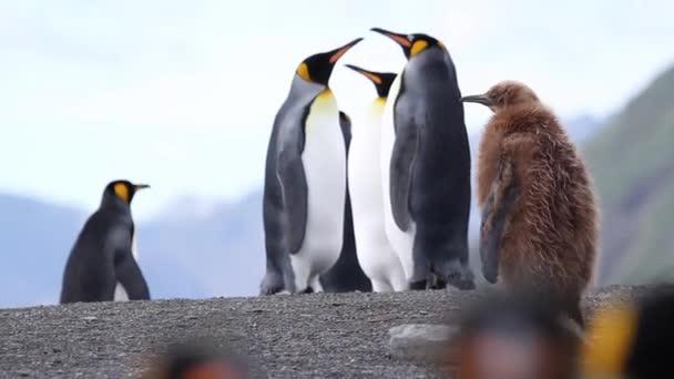 barna pingvin séta