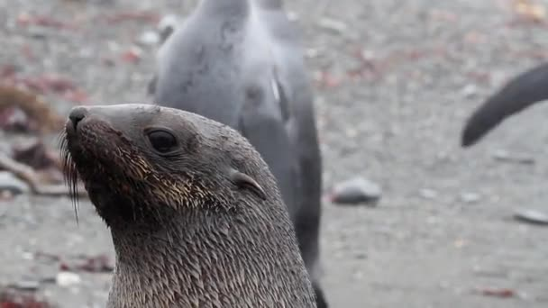 seal surrounded by king penguins