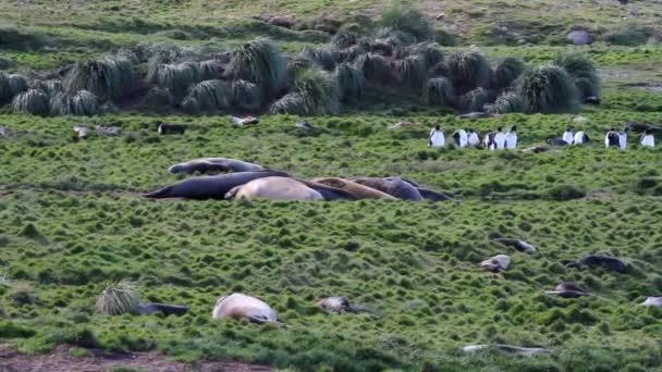 Alvás elefántfókák