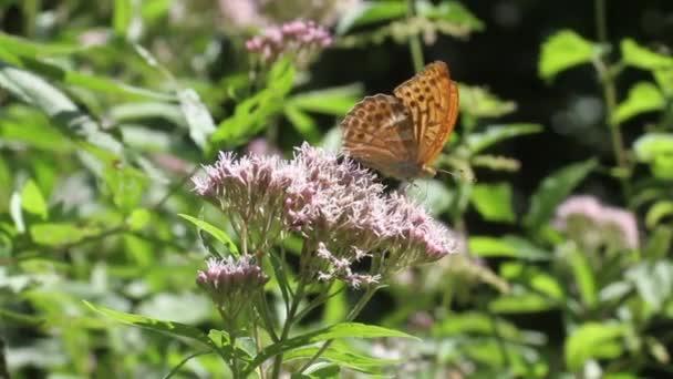žlutý motýl na květině