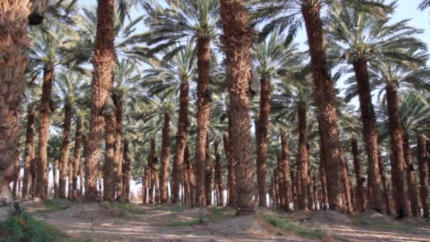 Úžasné palmy