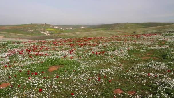 Červené a bílé kytice