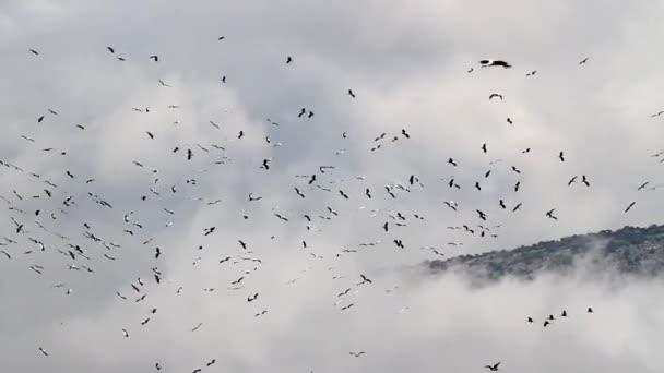 Fehér gólya migráció