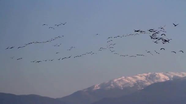 hejno ptáků, kteří létali