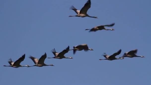 Hejno létajících ptáků