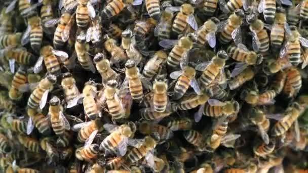 Včely dělat med
