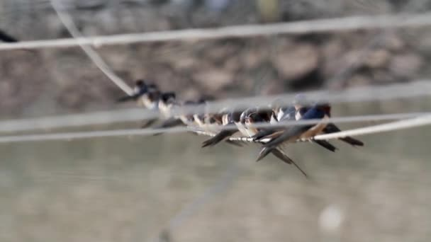 Birds gathered on wire