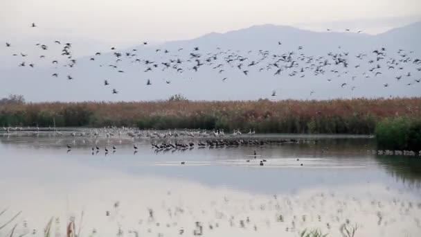 Ptáci na břehu moře