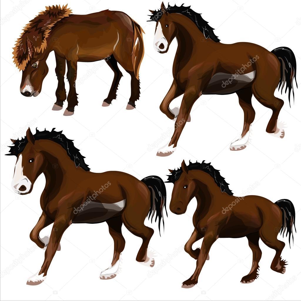 馬のイメージ — ストックベクター © wpitipong #67205913