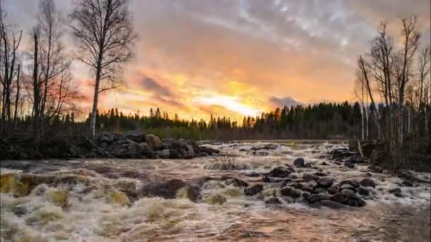 Čas 4K tekoucí říční vody na kamenech obklopených zelenými borovicemi v severním Švédsku během západu slunce