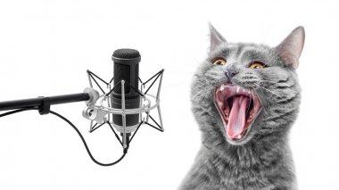 Very loud singing cat