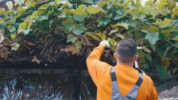 Blízký záběr mladého farmáře prořezávání vinné révy