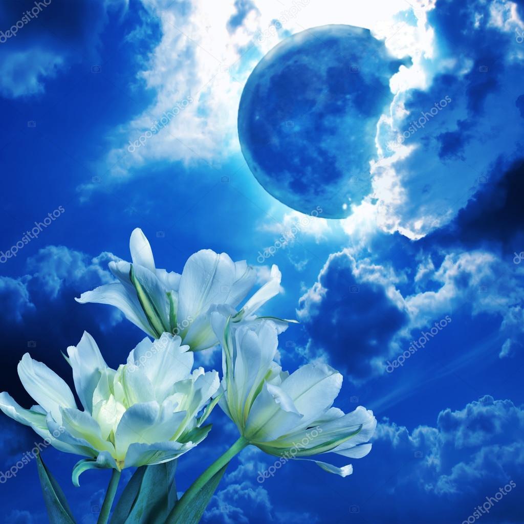 POEMAS SIDERALES ( Sol, Luna, Estrellas, Tierra, Naturaleza, Galaxias...) - Página 21 Depositphotos_120547788-stock-photo-white-tulips-in-the-blue