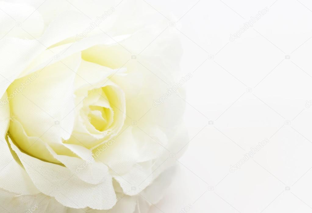 White rose fake flower on white background
