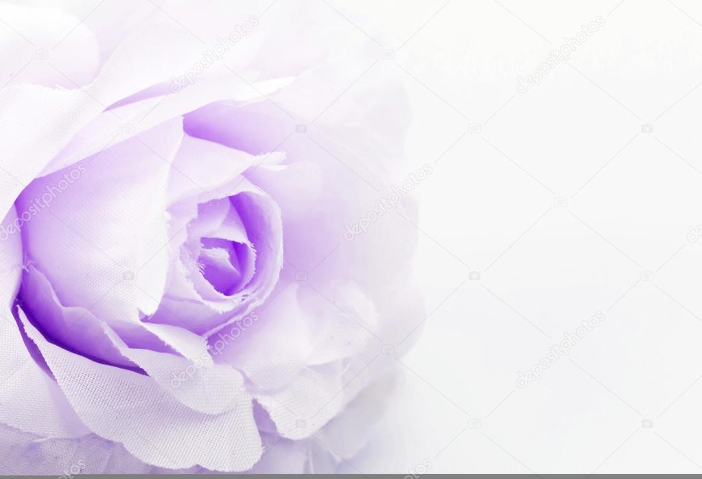 rose fake flower on white background, soft focus