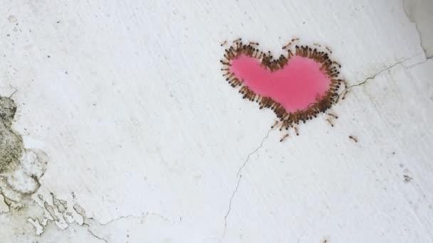 Skupina červení mravenci jíst sladké srdce