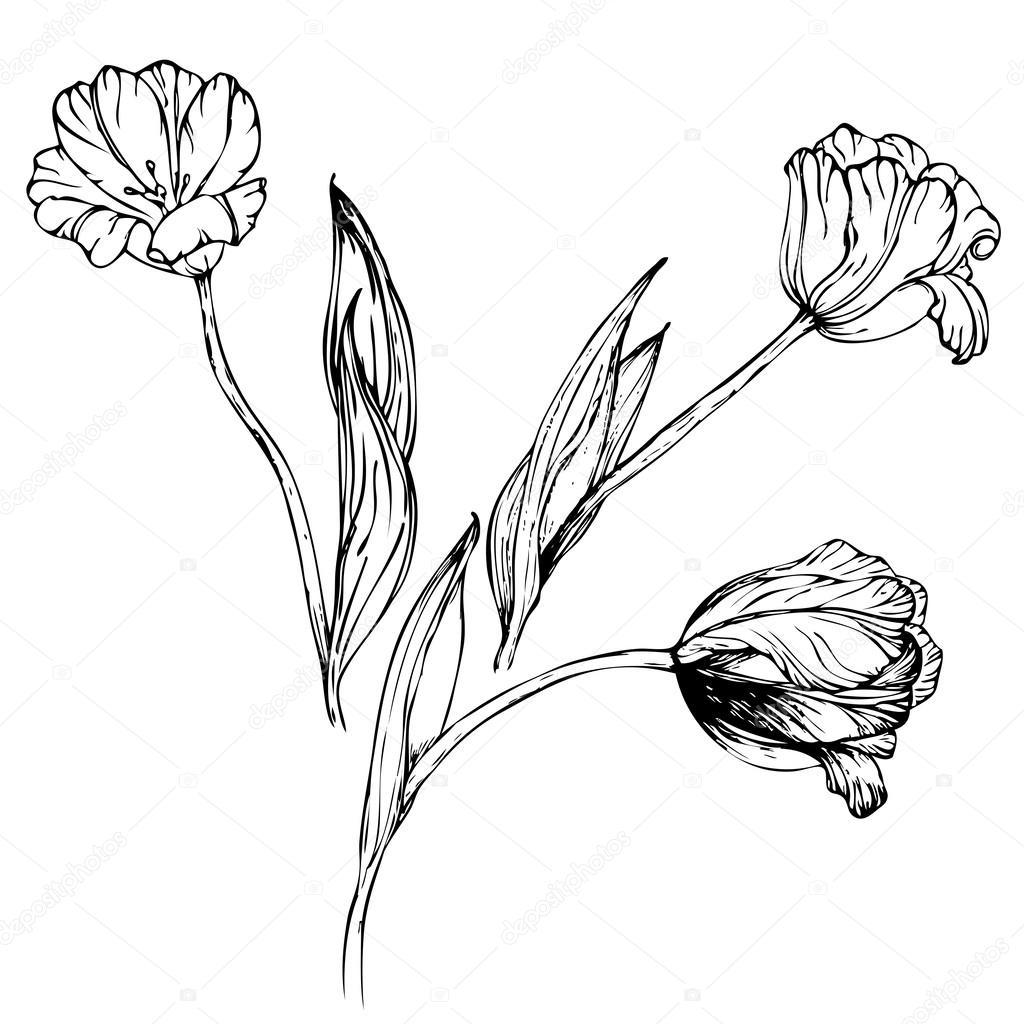 vector hand drawing black and white tulip flower stock vector mariykamur 53009425. Black Bedroom Furniture Sets. Home Design Ideas