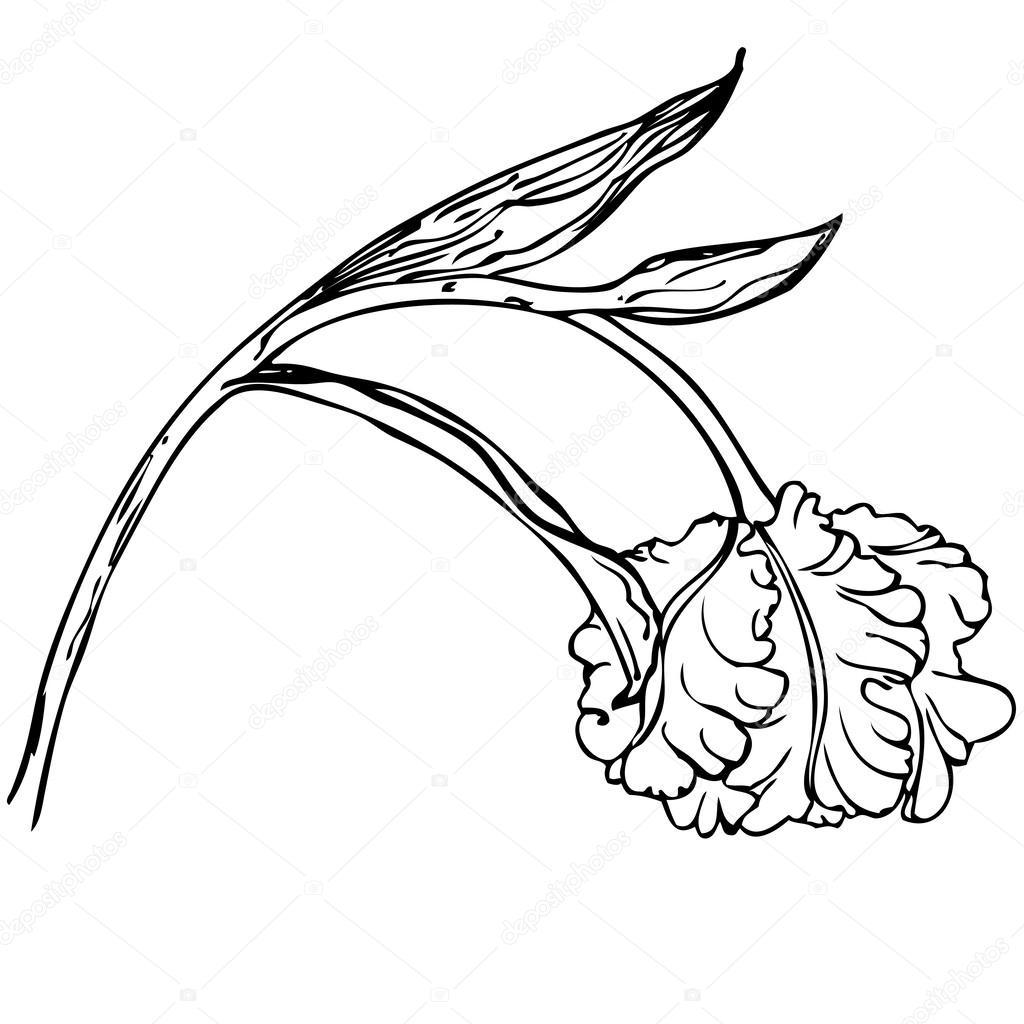Fleur De Tulipes Noir Et Blanc Dessin Vectoriel Main Image