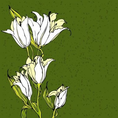 Vector green background with white lily flowers
