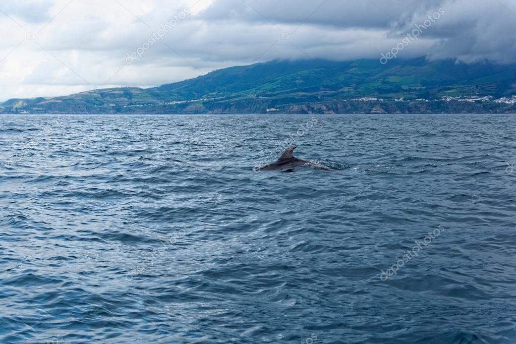 Франки в океане скачать.