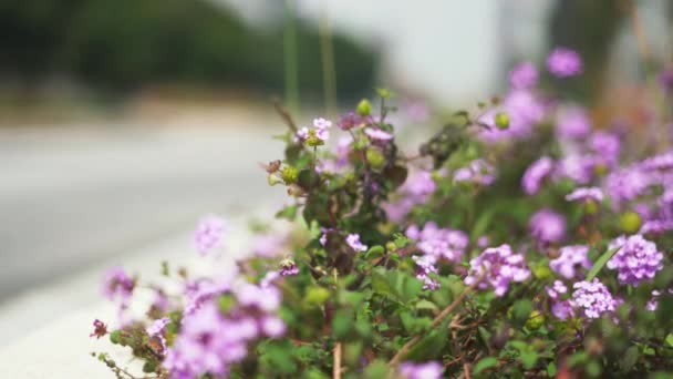 Up Close View of Purple Flowers with a Blurry Street as Background