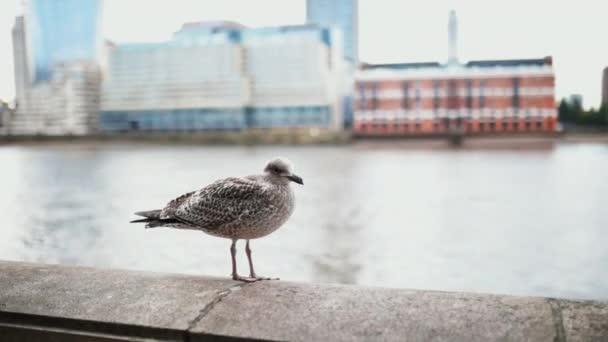 Körözött kilátás egy sirályra, amely egy betongáton áll, egy folyóval mögötte.