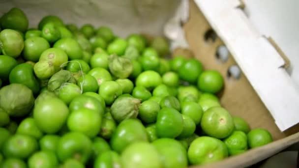 Hromada různě velkých zelených rajčat v lepenkové krabici