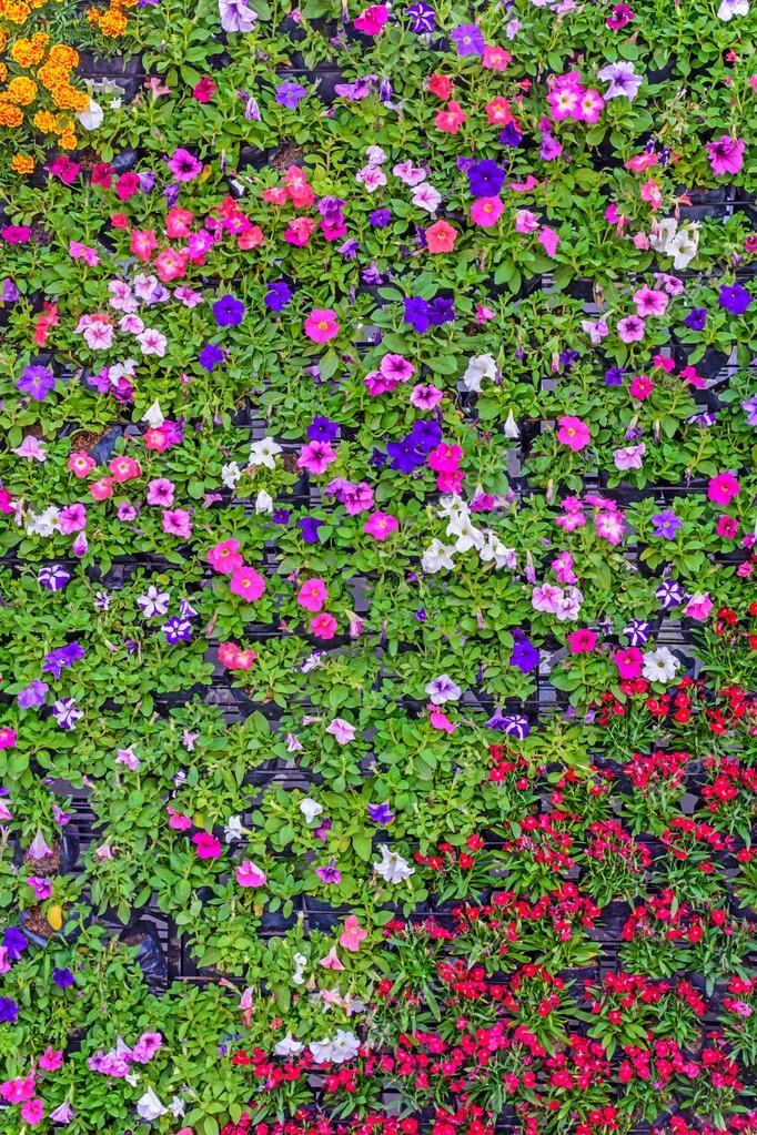 Flower wall.