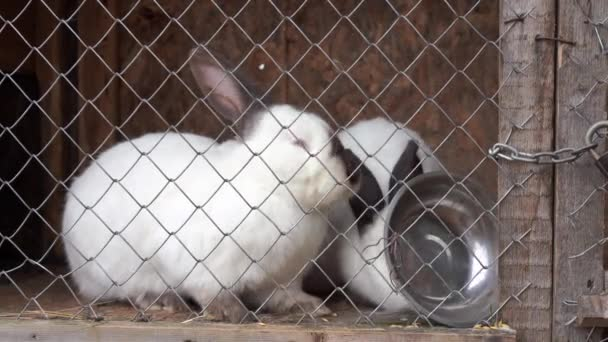 Different rabbit sitting cage on farm eating hay Agricultural concept.