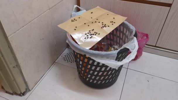záběry scény lepkavé papírové pasti na domácí škůdce.
