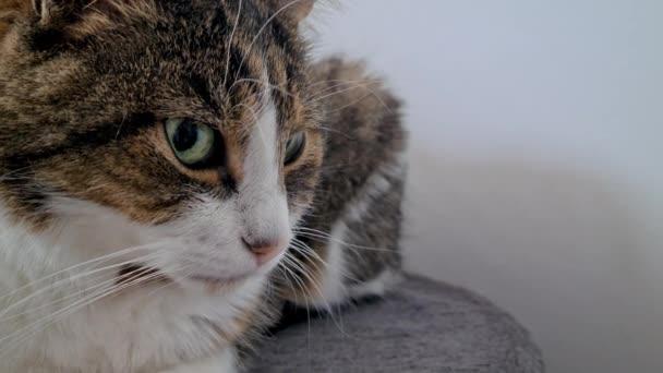 kočka na pozorování, portrét, zblizka