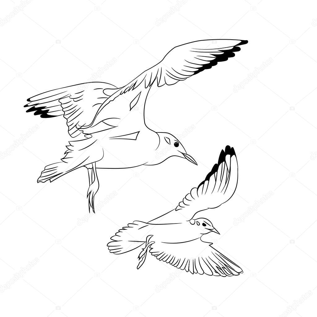 Noir et blanc dessin anim vector illustration du vol des - Dessins de mouettes ...