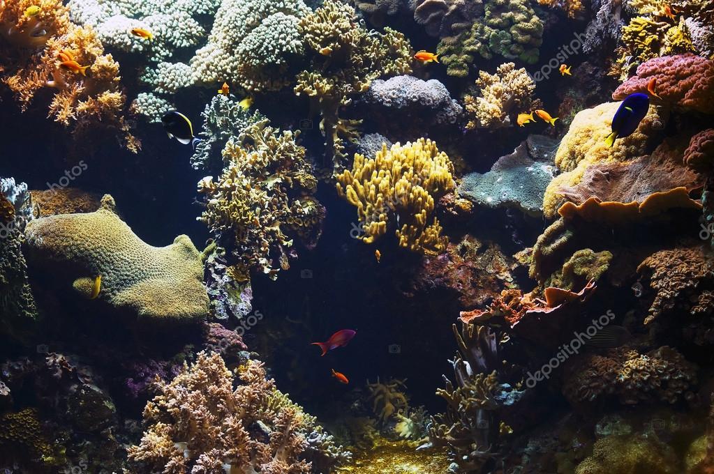 Aquarium background image