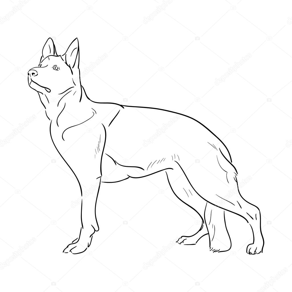 Hand drawn German Shepherd dog. Sketch vector illustration