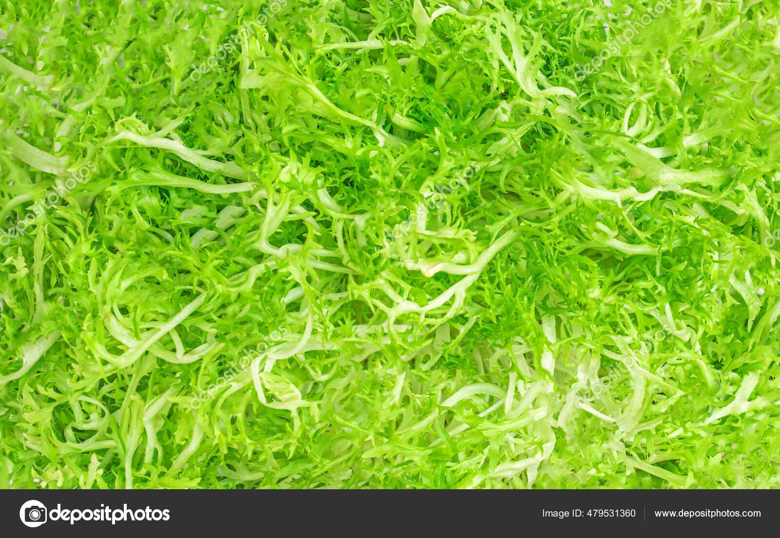 Frisee Lettuce Leaves Background Green Crispy Endive Curly ...