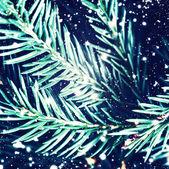 Fotografie Christmas fir tree