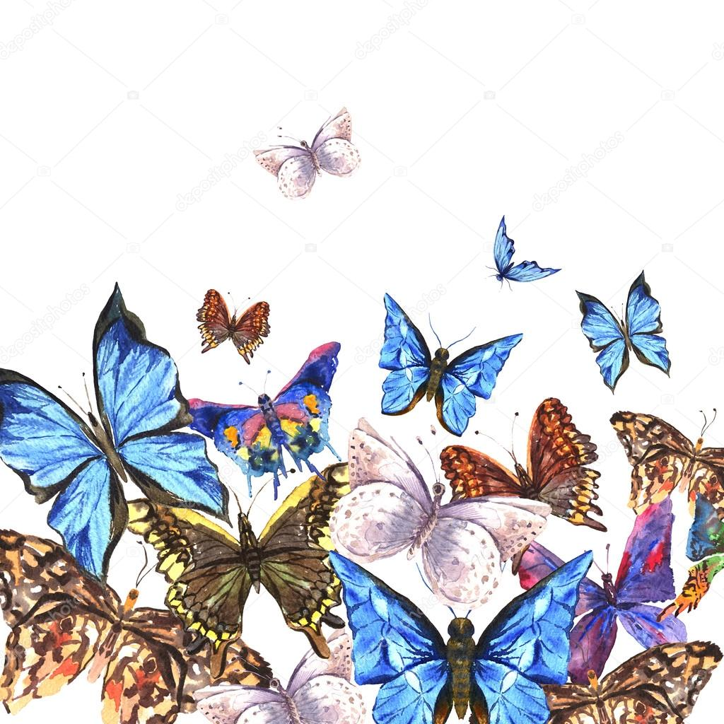 Watercolor butterflies on a white background, greeting card