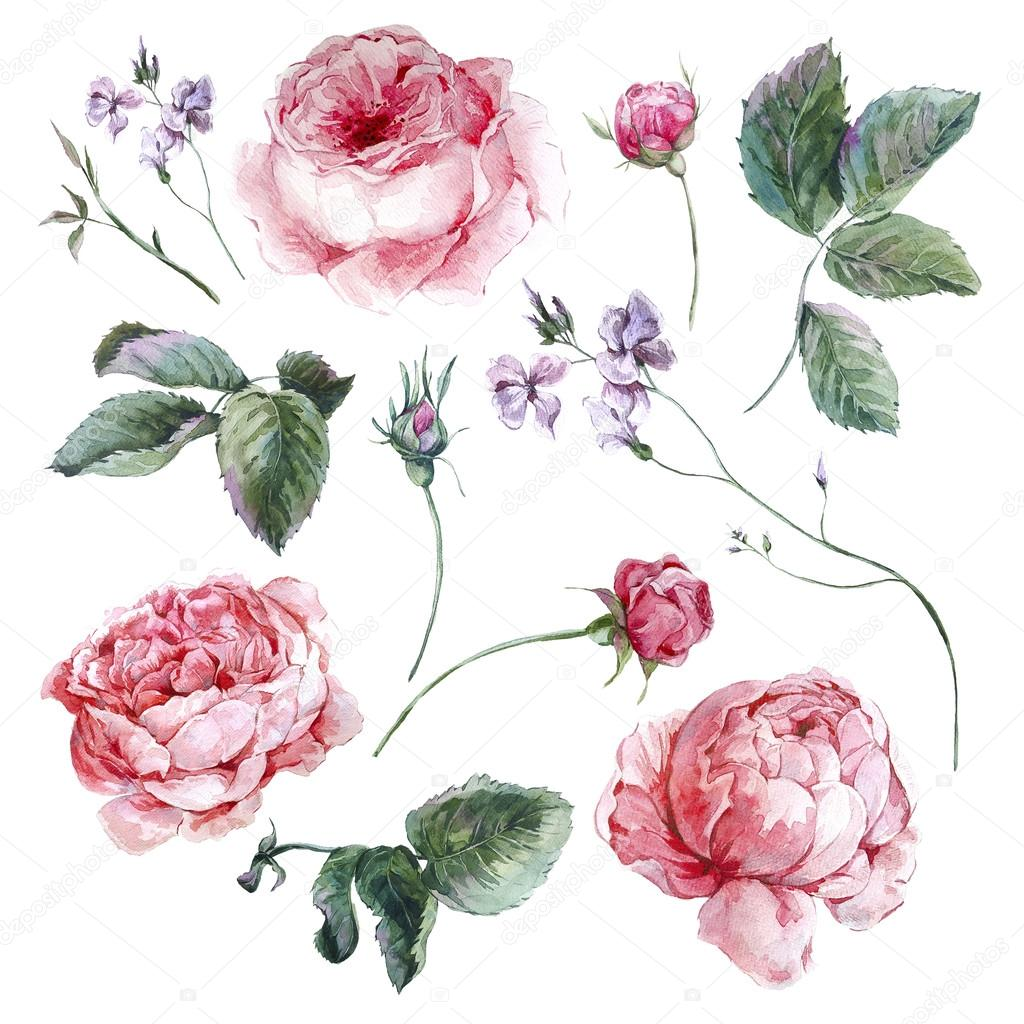 Set vintage watercolor bouquet of roses leaves branches flowers and wildflowers