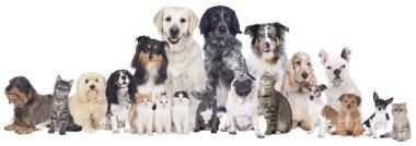 Big group of pets