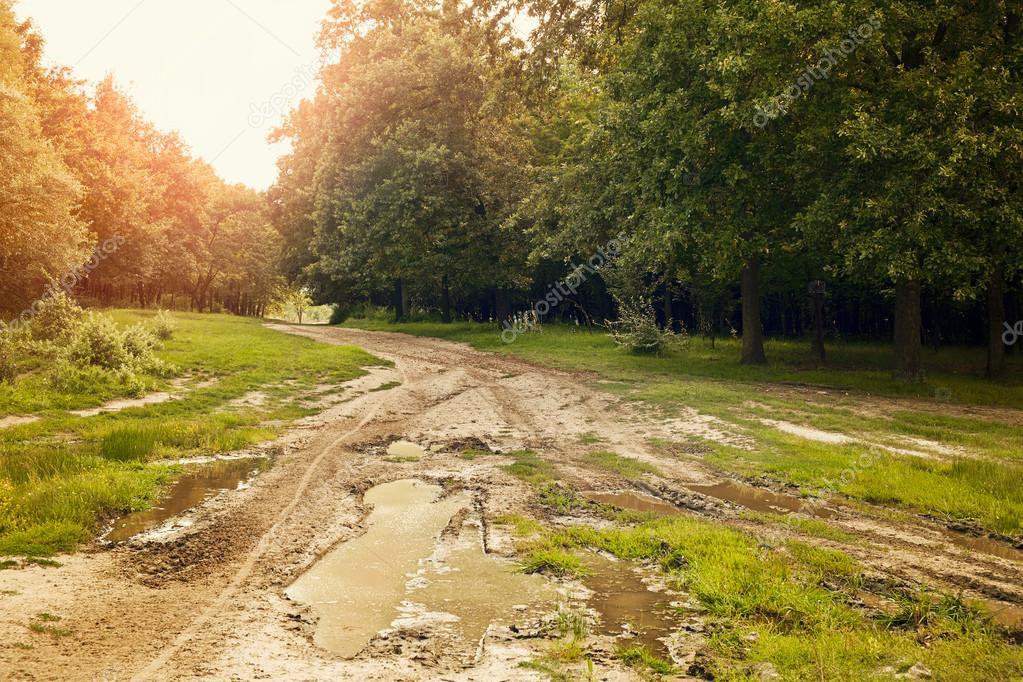 Фотообои Beautiful forest in sun rays