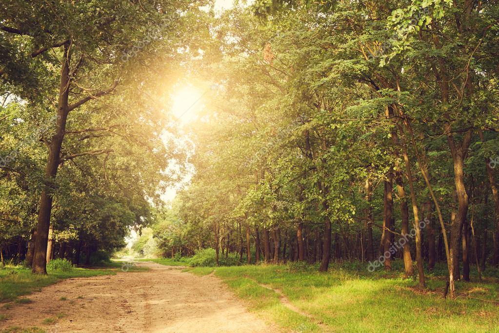 Фотообои Красивый лес в лучах солнца