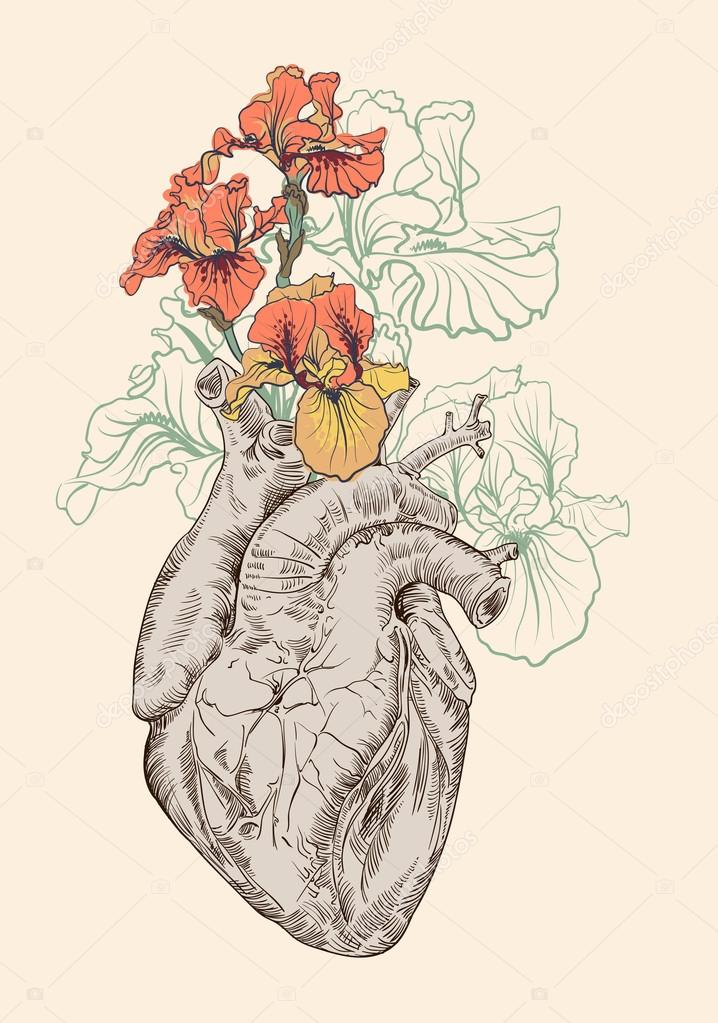drawing Human heart with flowers