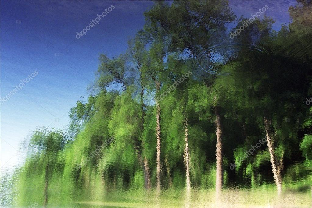 Reflection of green trees in the blue water.